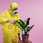 Best Foaming Wasp Spray